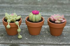 Needle Felted Cactus by scratchcraft on Etsy