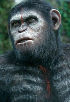 Archives Of The Apes: Dawn Of The Planet Of The Apes (2014) Part 25