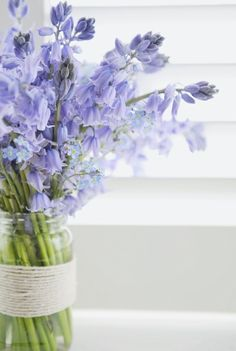 Bluebells - I'd have them in every room every day if I could