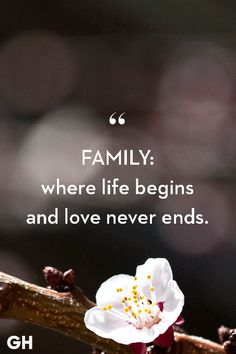 These 45 Quotes Accurately Describe Your Family