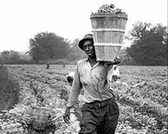 Premio Pulitzer de fotografía de 1970:  Para Dallas Kinney, del Palm Beach Post. Premiado por sus fotos de los inmigrantes de Florida trabajando en el campo.
