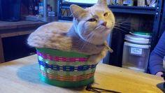 Muffin Cat  Photo via Imgur-  PARECE UMA MASSA DE PÃO JÁ MUITO CRESCIDA...