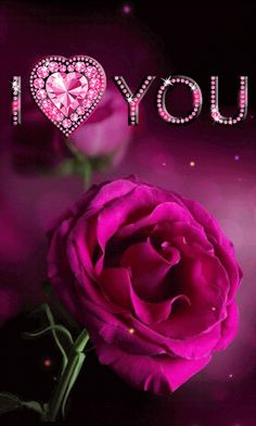 55 Good Morning Rose Flowers Images Pictures With Romantic, Red Roses Flowers Gif, Beautiful Rose Flowers, Beautiful Flowers, Love You Gif, Love You Images, Purple Roses, Pink Flowers, Gif Rose, Roses Valentine
