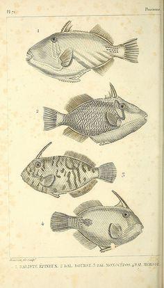 Oeuvres du comte de Lacépède :. A Paris :Chez F.D. Pillot :1830-1833.. biodiversitylibrary.org/page/39933207