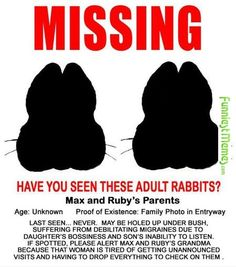 Funny Pictures Have You Seen These Adult Rabbits?