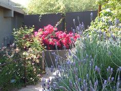 Center for Desert Living Trail - Desert Botanical Garden