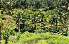 From magnificent mountains to rugged coastlines to volcanic hillsides to black sandy beaches, Bali boasts a rich and diverse culture. Rice Terraces, Sandy Beaches, Travel Guide, Bali, Vineyard, Mountains, Outdoor, Outdoors, Travel Guide Books