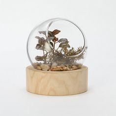 Orbit Terrarium