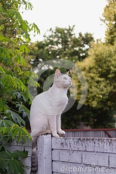 Cat looking intently sitting on the top of the wall