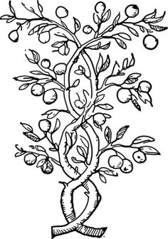 fruit-tree-branches-clip-art_f.jpg (298×425)