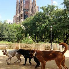 Giochiamo davanti alla Sagrada Familia