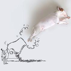 Jimmy Choo the bull terrier rafaelmantesso's photo on Instagram