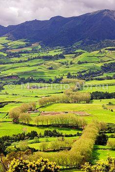 Trees bordering a rural road near Povoação. São Miguel, Azores islands, Portugal