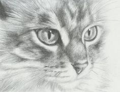 Image result for how to draw realistic cats