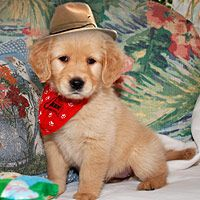 cowboy costumes for dogs | Cowboy Dog Costume - Pictures of Halloween Pet Costumes - Good ...