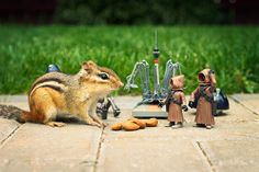 """""""Billy"""" the chipmunk and Star Wars toys, photographed by Chris McVeigh (PowerPig @ flckr.com) (© 2008). Artist's note: """"Just to clarify — yes, this is real! Billy is very tolerant of poking and prodding while he collects almonds and having an action figure[s] on his back didn't bother him in the least."""""""
