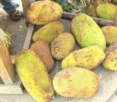 88.ジャックフルーツを食べよう! 世界で一番美味しいフルーツ ザンジバル