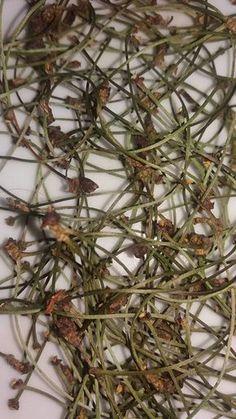 Léčivé stopky z třešní Máte nadbytek třešní? Vyhazujete stopky a pecky? Zkuste si je letos nasušit a přidávat do bylinkových čajů. Budete překvapeni jejich působením. čistí krev regenerují játra rozpouští kameny v ledvinách a močovém měchýři odvodňují zlepšují činnost lymfatického systému ulevují revmatickým bolestem regenerují nervový systém Jak na to? Stopky nakrájejte nebo nastříhejte…