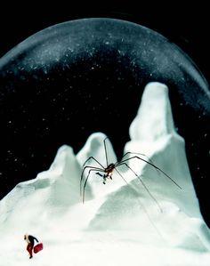 spider traveler