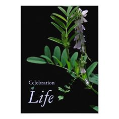 Orchids 1 celebration of life funeral announcement funeral indigo 1 celebration of life funeral announcement stopboris Choice Image