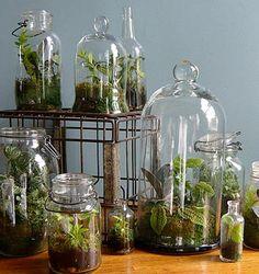Love, love, love terrariums. Can't wait to make my own. #terrarium #garden #home_decor #plants
