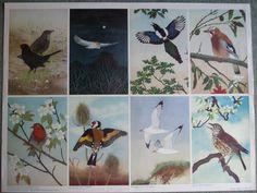 Eight Bird Studies by Maurice Wilson 1954 Child School Education Vintage Poster Vintage Posters, Heaven, Education, Children, School, Illustration, Painting, Ebay, Art