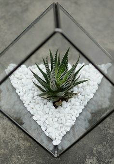 Indoor plants are the perfect way to add a little spring to your home decor before the weather warms up! A pretty succulent in this geometric terrarium will soon be the favourite part of your flat.