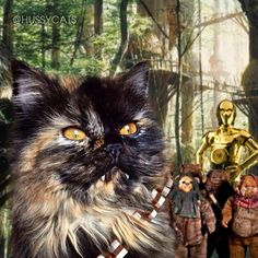 A long time ago in a galaxy far, far away.... #theforceawakens Meowdel: @mynameiswicca #tbt ✨ Everything on HussyCats.com is on sale for the holidays!!! ✨ For a chance to be Hussified, follow @HussyCats on Instagram & use #HussyCats to submit your photos! ✨@catconla #catconLA