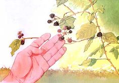 Foraging for Edible Wild Plants: A Field Guide to Wild Berries