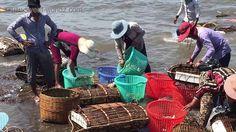 Cambodia trip video 2016 | Visit Kampot Province Cambodia | Sea Food Market at Kep | Bokor Mountain