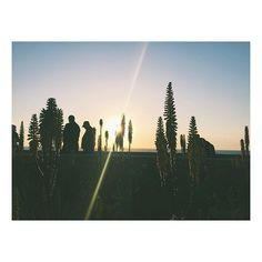 La jolla sessions 🌾 #sunset #shadows #lajolla #instatravel #travelgram #sandiego #california #flowers #nature #wanderlust #lajollalocals #sandiegoconnection #sdlocals - posted by Estefania  https://www.instagram.com/nia__nia. See more post on La Jolla at http://LaJollaLocals.com