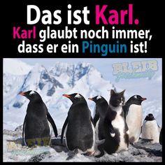 Das ist Karl. Karl glaubt noch immer dass er ein Pinguin ist!