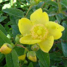 51 Meilleures Images Du Tableau Arbustes A Fleurs Flowering Shrubs