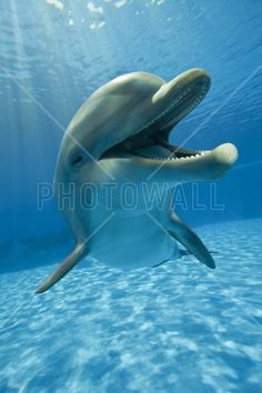 Encounter with Dolphin - Fototapeter & Tapeter - Photowall