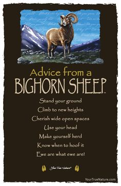 Advice from a Bighorn Sheep- Postcard- Your True Nature