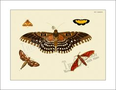 Butterfly Print 90 Butterflies Antique Vintage door TheOldFern, $12,00
