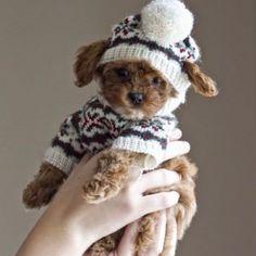 barkbox's photo on Instagram: it's sweater weather