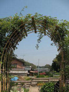 bamboo arch trellis - All About Bamboo Trellis, Arbors Trellis, Diy Trellis, Bamboo Garden, Garden Trellis, Outdoor Pergola, Cheap Pergola, Backyard Pergola, Pergola Shade