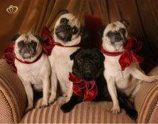 Navidad con pugs