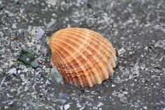 Bull Island, Dollymount Beach, Dublin Photo by Joanna Travers Dublin City, Parks, Shells, Island, Beach, Summer, Conch Shells, Summer Time, Seashells