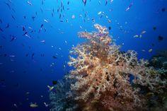 Diving with Navutu Stars Resort
