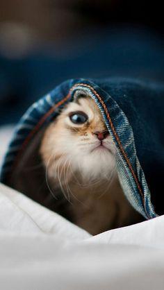 é tão impressionante esse felinos ^~^