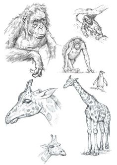 Would you like to learn to draw more realistically? Or are you interested in perfecting a comic book style? Take our How To Draw Animals class to master the basics of drawing animals. Learn to draw fur, feathers and scales. Make your drawings look three-dimensional, acquire shading techniques, learn proportion & perspective skills, and more. We will complete one final finished piece ready for displaying on your wall, along with numerous sketches and drawings on paper!  How to Draw ...