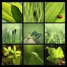 green photography - Google Search
