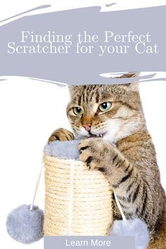 Does your cat bypass his scratcher only to start shredding the furniture? Here are some tips for finding a scratcher your cat will love