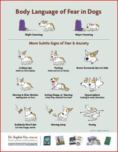 Body Language of Fear in Dogs - How to Read Your Dog's Body Language