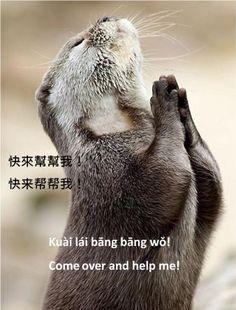 https://www.facebook.com/ZhongWenGuShi/photos/pb.359604593233.-2207520000.1430846250./10153136819418234/?type=3