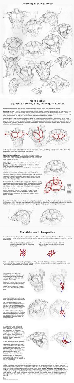 Wed 4: Torso Practice n' Tips by ~genekelly on deviantART via PinCG.com Human Anatomy Artist Reference