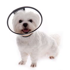 E-Collar Elizabethan Wound Healing Dog Cat Collar Pet Protection Medical Cone White -- You can find out more details at the link of the image. (This is an affiliate link and I receive a commission for the sales)