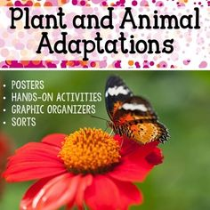 Your students will have so much fun with this adaptations unit! There is a wide variety of graphic organizers and fun activities that will get your students excited about science.